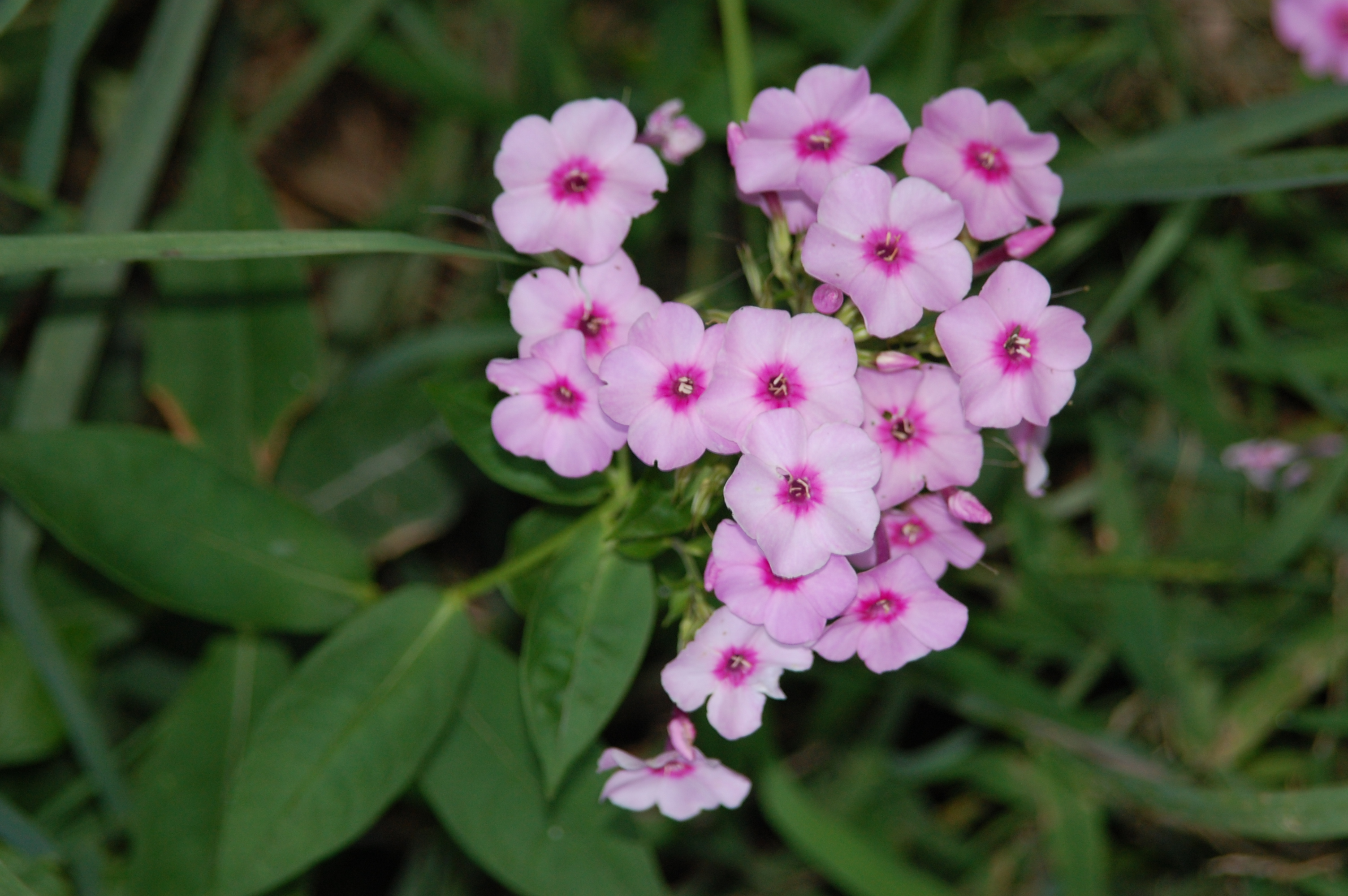 Fall Colors Eden Hills