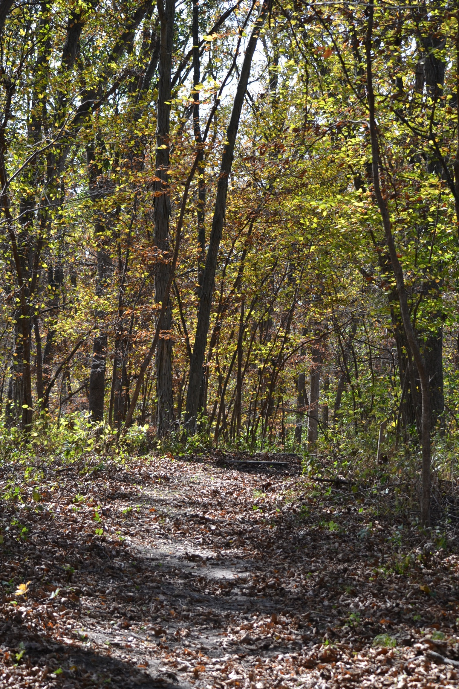 Ashton Wildwood Park Eden Hills