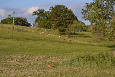 03 June 2012 Eden Hills