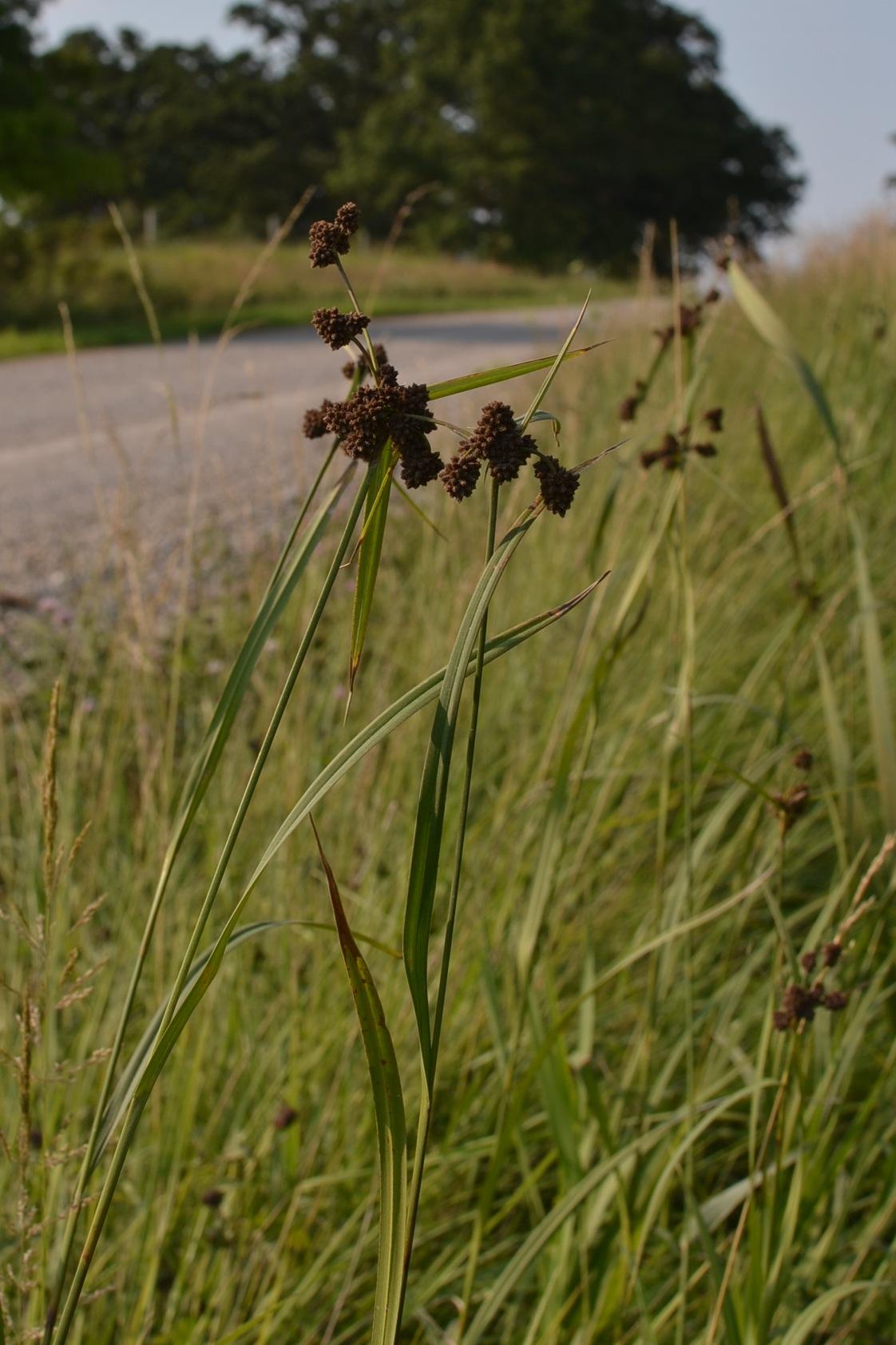 In my ditch eden hills for Eden hill walk in