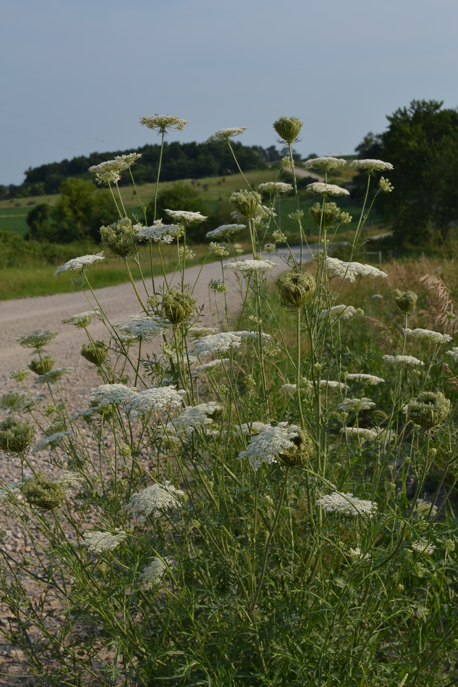 06 july 2012 eden hills for Eden hill walk in