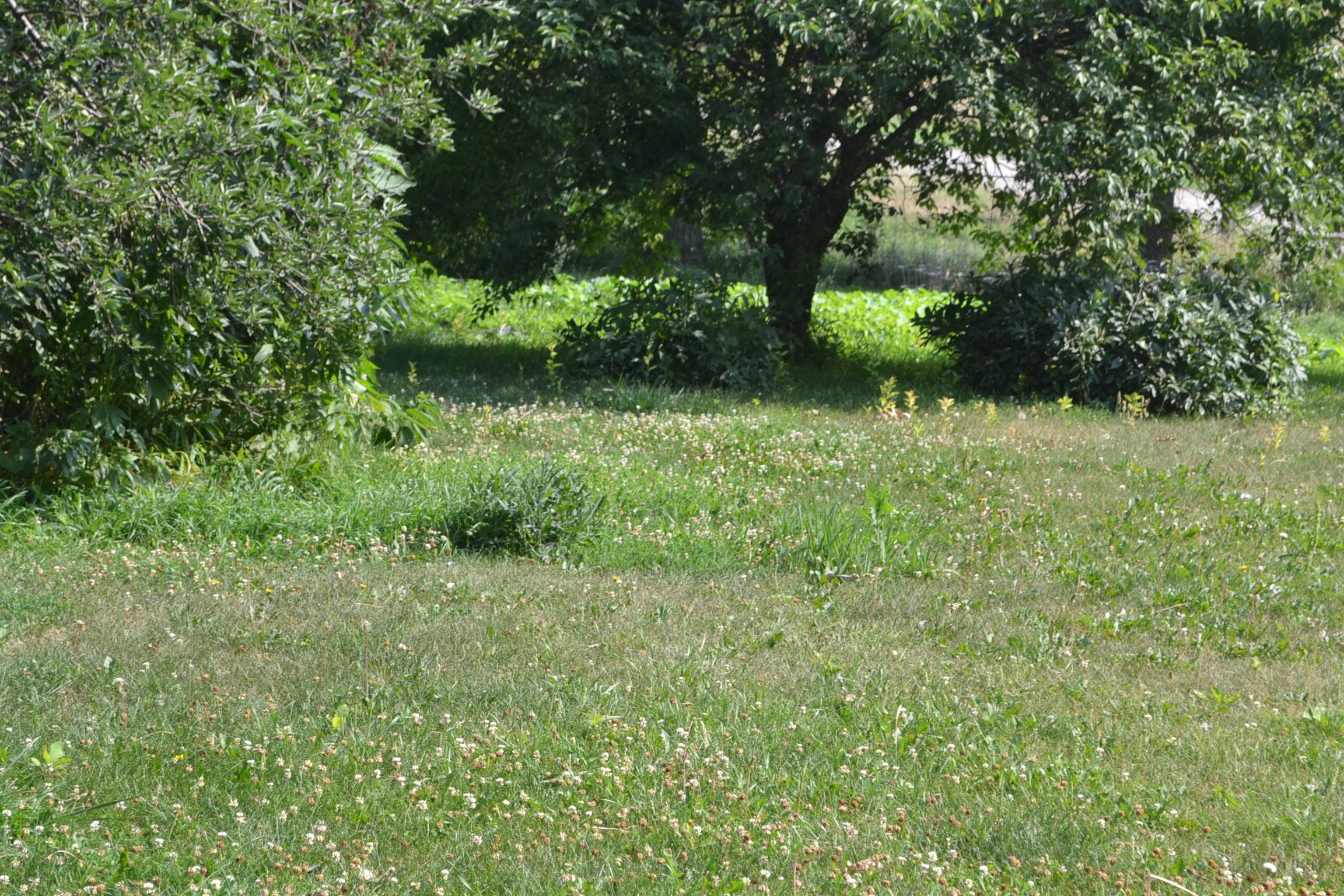 Backyard On The First Eden Hills