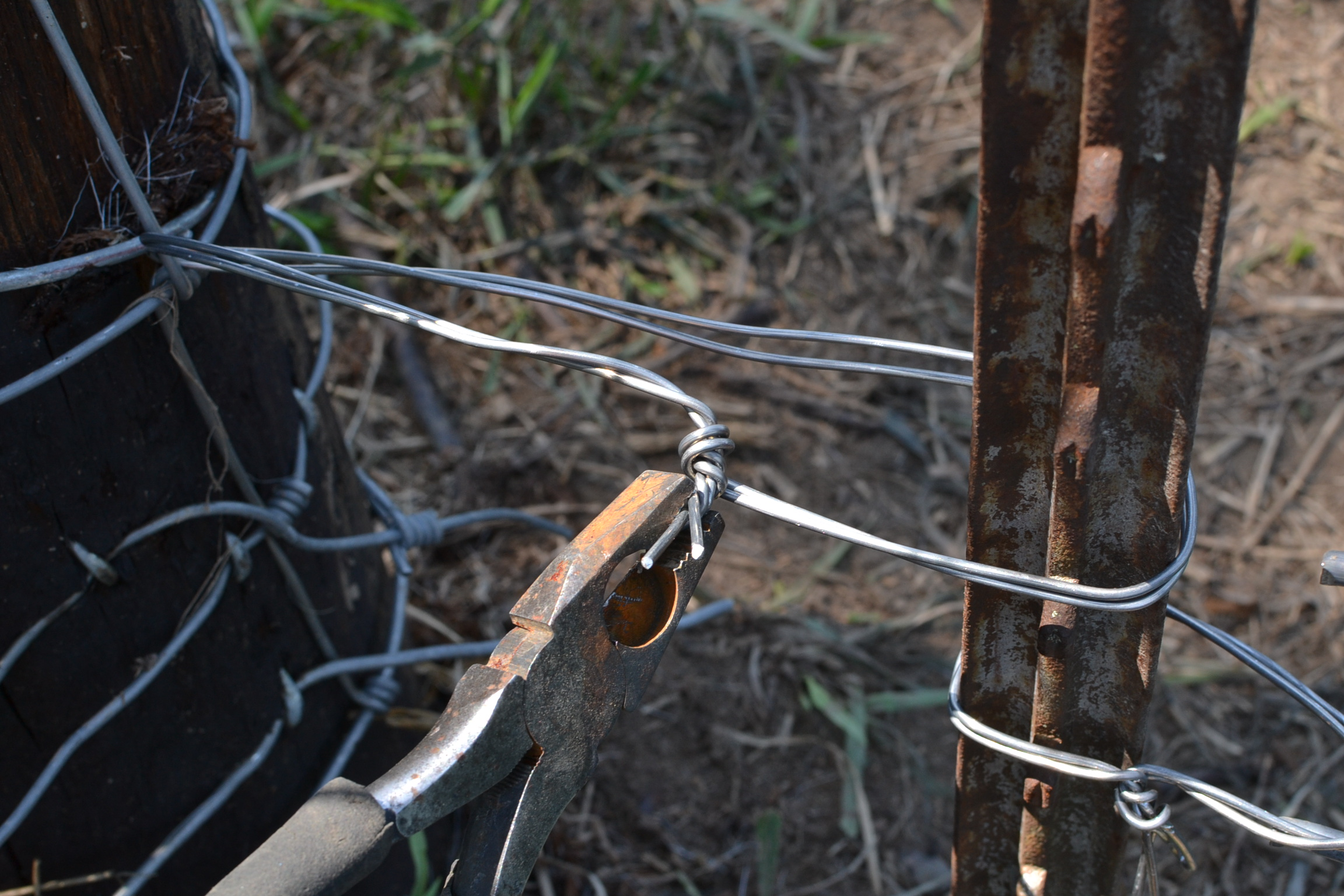 barbed-wire | Eden Hills