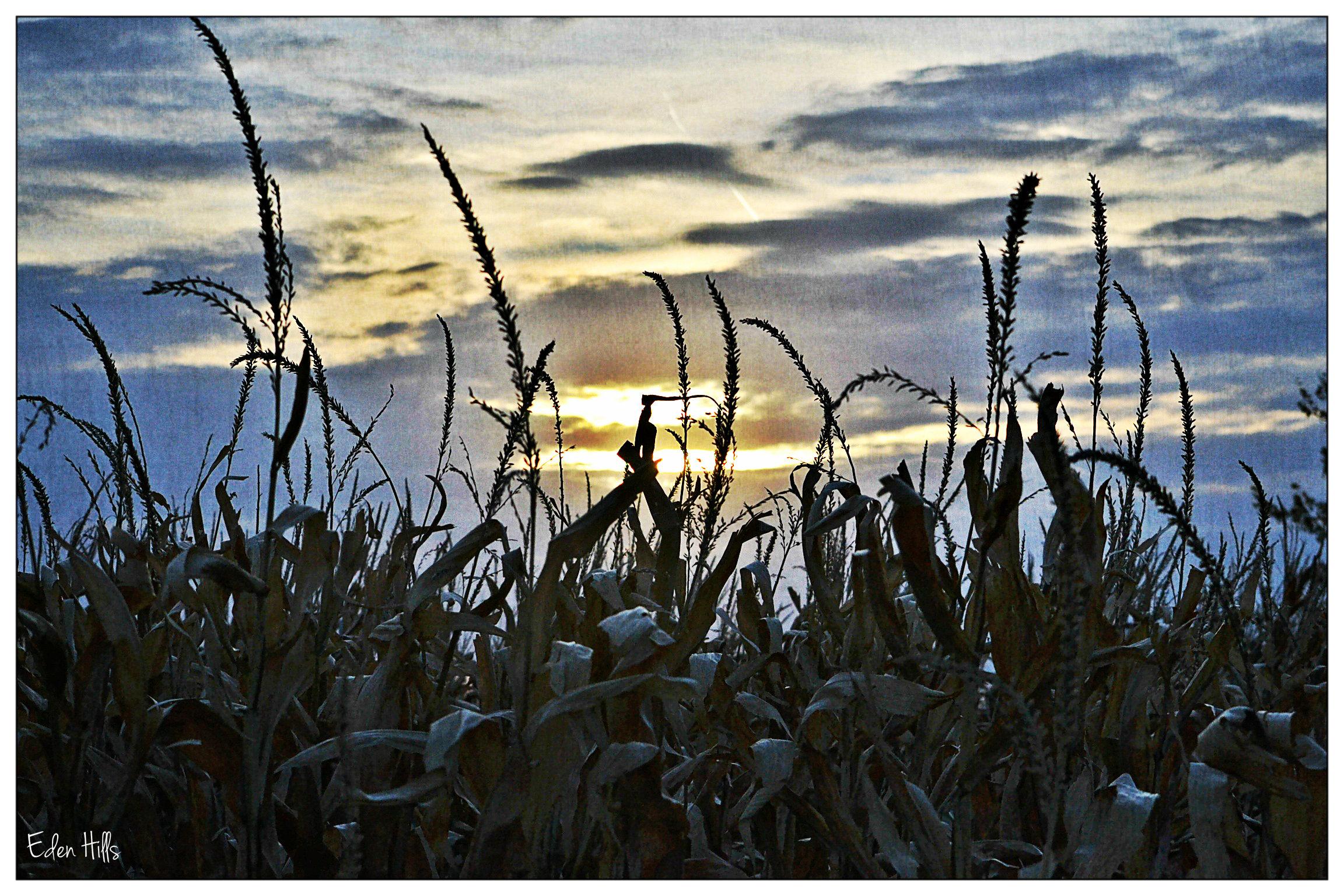 Farm Quotes Farm Quotes  Eden Hills