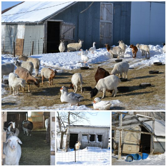 barnyard collage