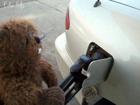 Beavie Getting Gas