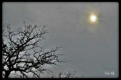 sun in overcast sky