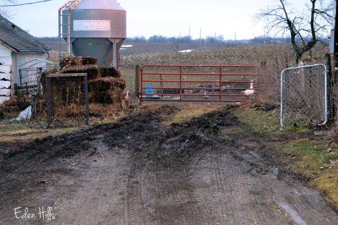 muddy tire tracks
