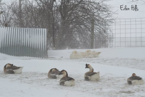 geese in snowstorm