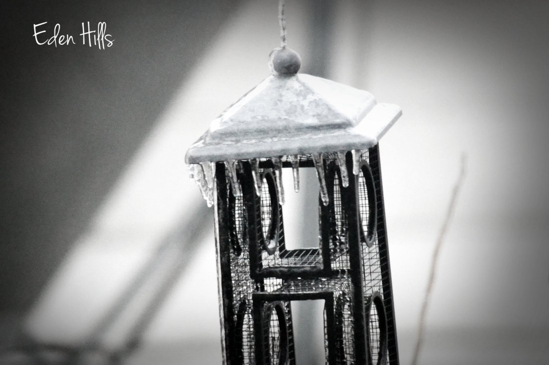 icy bird feeder