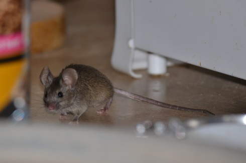 mouse on cupboard