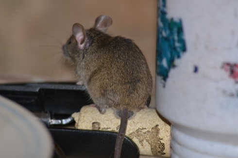 mouse on cork