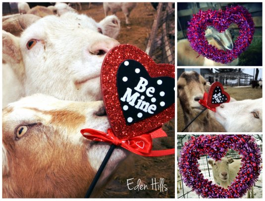 Valentine Goat collage