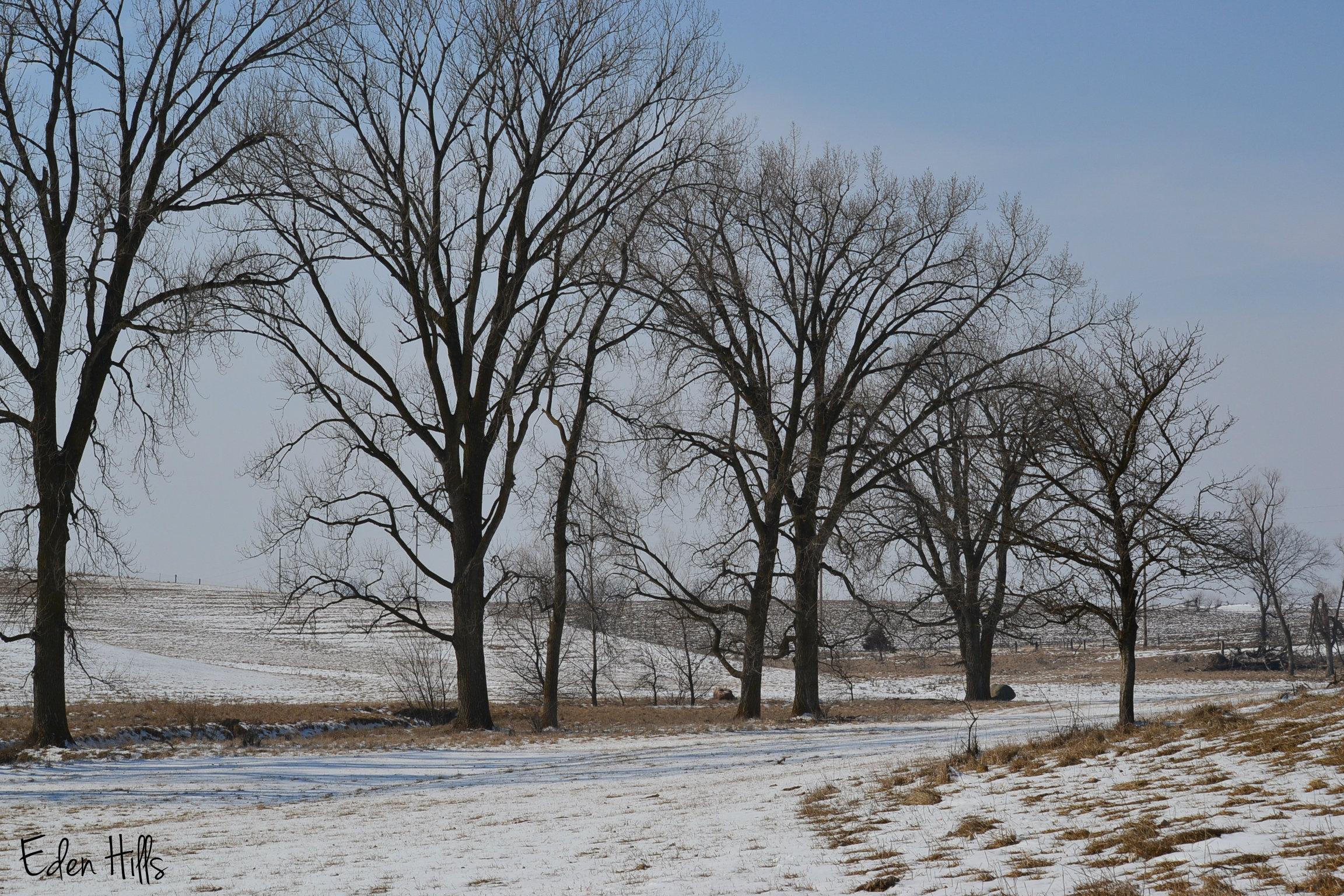 Deer tracks eden hills for Eden hill walk in
