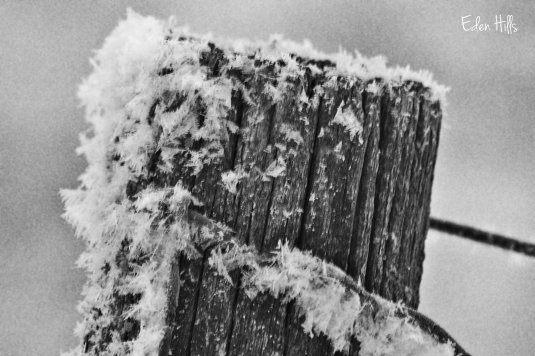 hoarfrost on fence