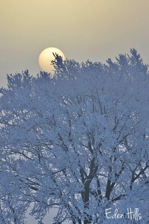 sunrise hoarfrost