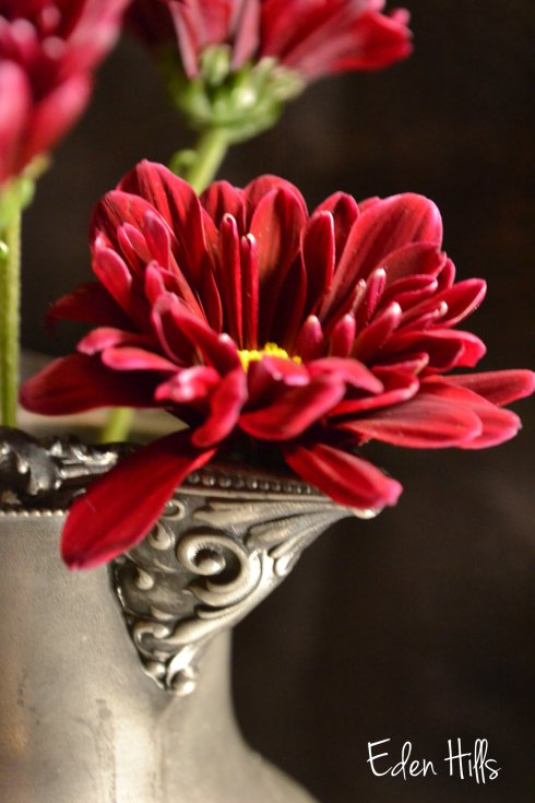 flower in quadruple plate pitcher