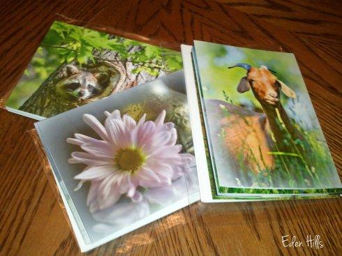 Eden Hills Note Cards
