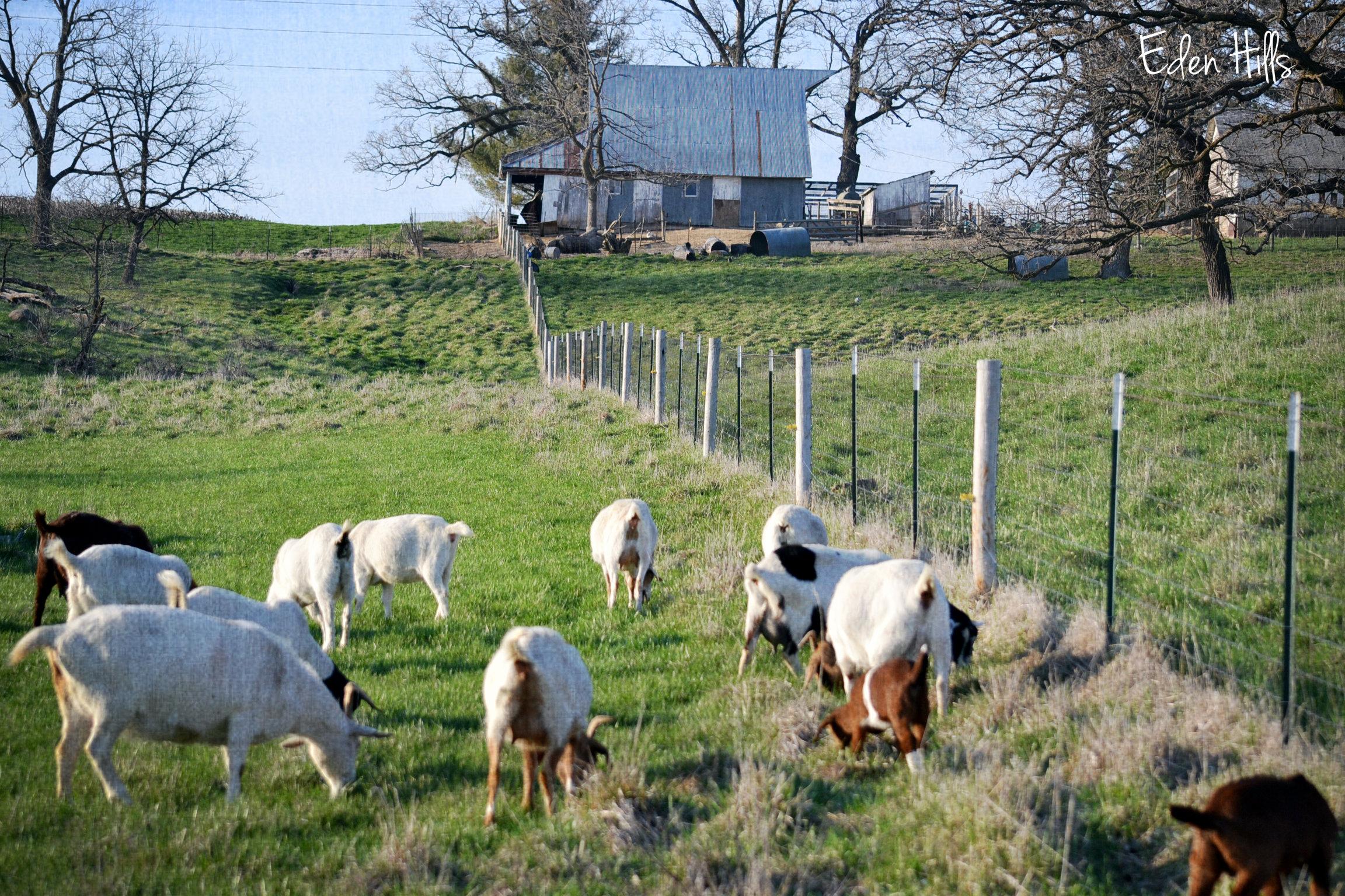 From The Farm Blog Hop Eden Hills