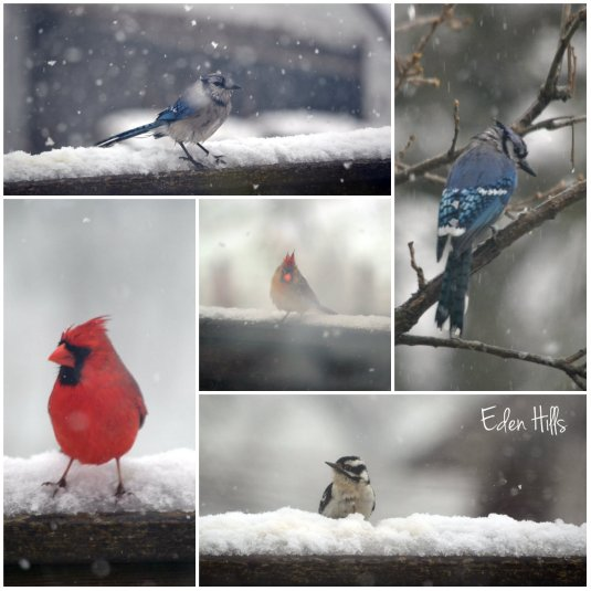 snowy bird collage