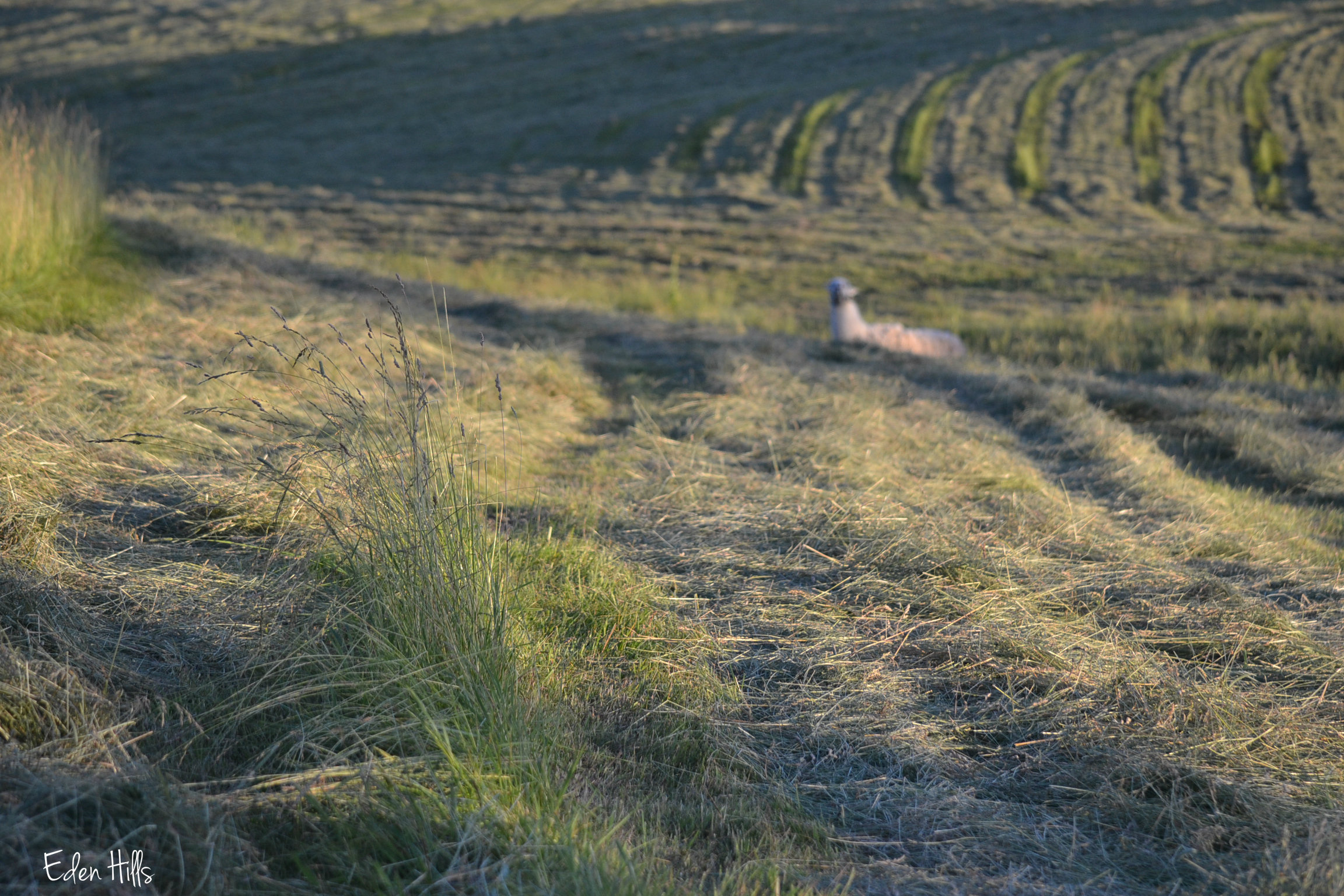 Hayfield Scavenger Hunt Eden Hills