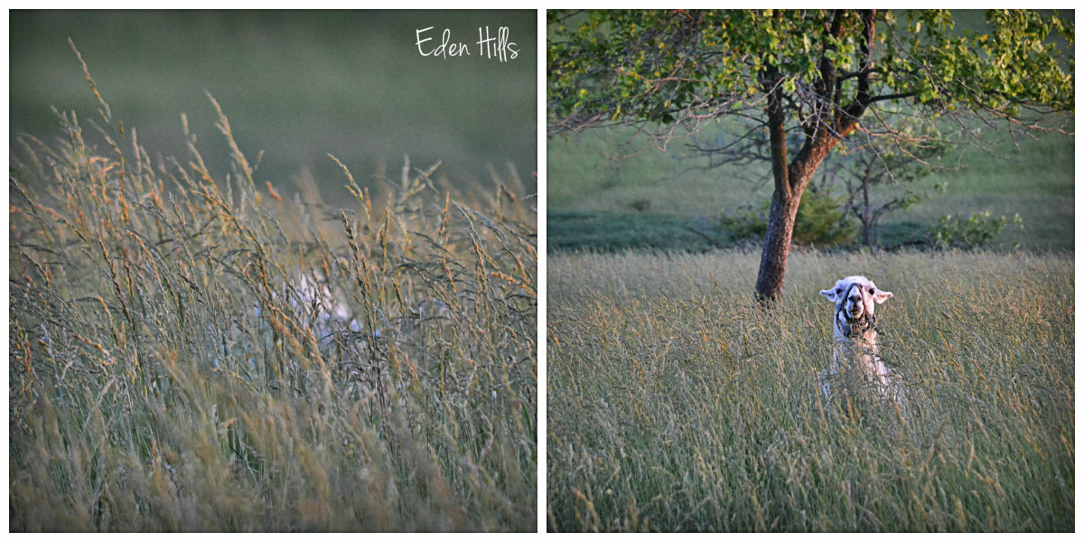 In the evening eden hills for Eden hill walk in