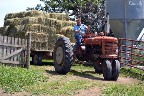 hayrack full of hay