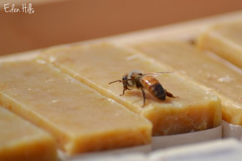 honey bee on soap