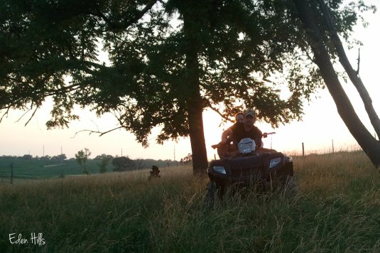 calf on four wheeler