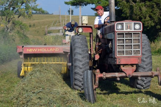 making hay Farmall 666