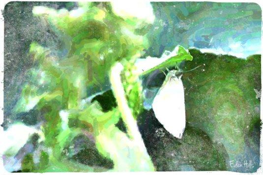 sulfur moth