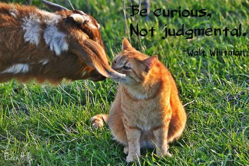 Curious not Judgmental