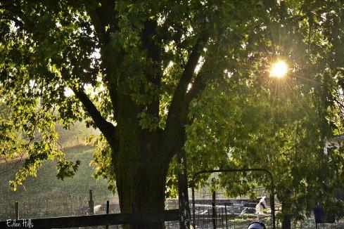 sunflare rain