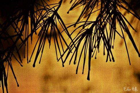 pine needle silhouette