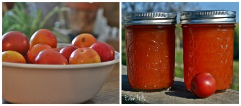 plums and  jam collage