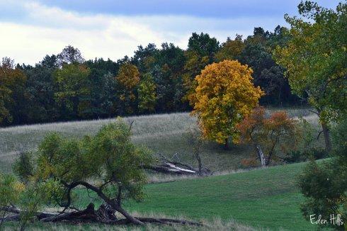fall pasture scene