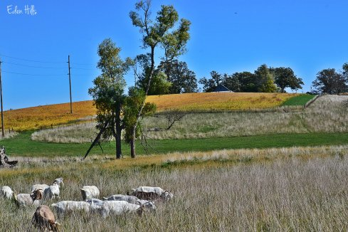 fall fields and pasture
