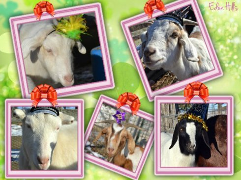 New Year Goat Collage