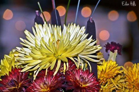 fall flower bokeh