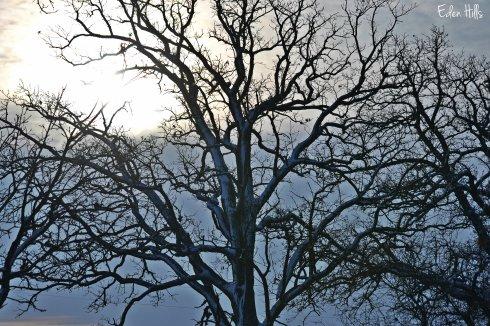winter sun and sky