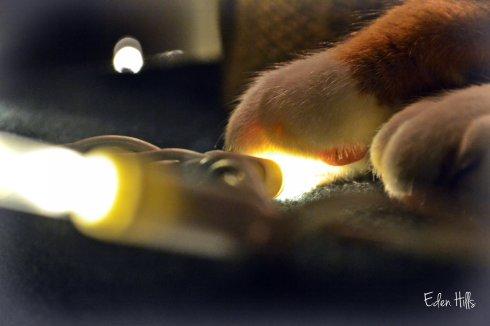 Christmas light and paw
