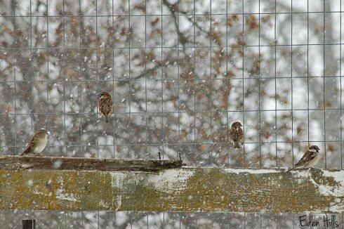 birds on fence