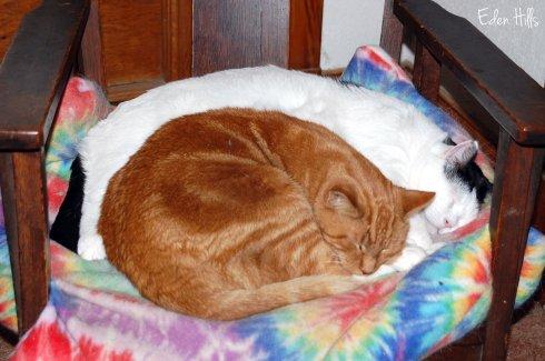 cats on cushion
