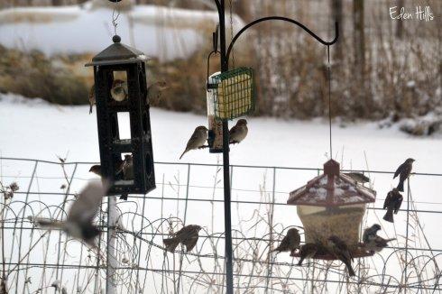 birds at feeders