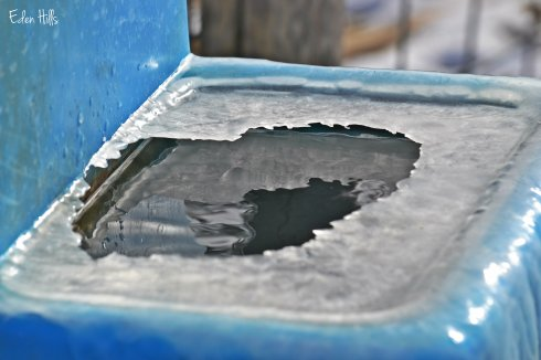 ice on cattle tank