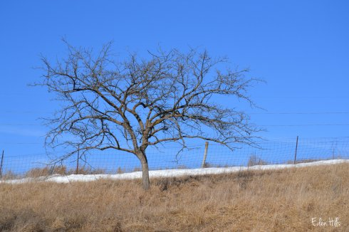 dead tree and blue sky
