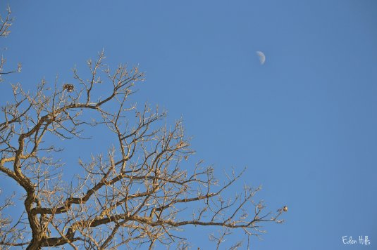 moon in afternoon sky
