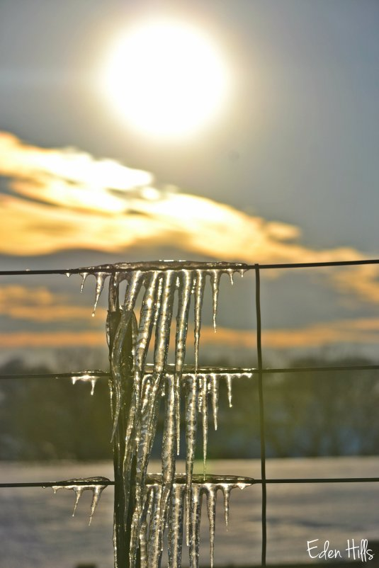 sun over icicles