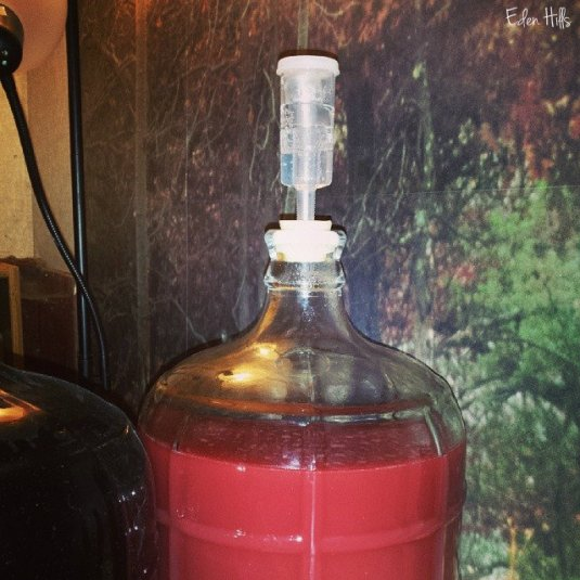 blackberry mead