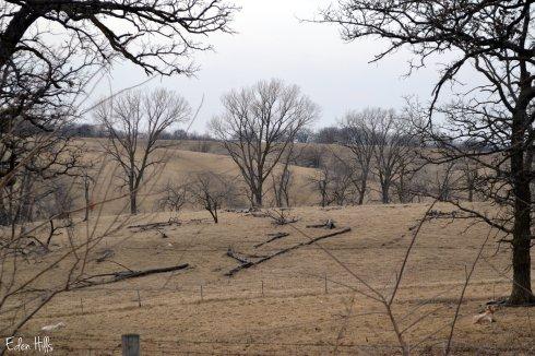 brown pasture